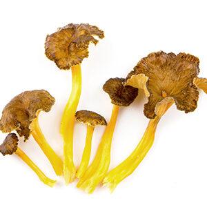 seta camagroc setas y hongos